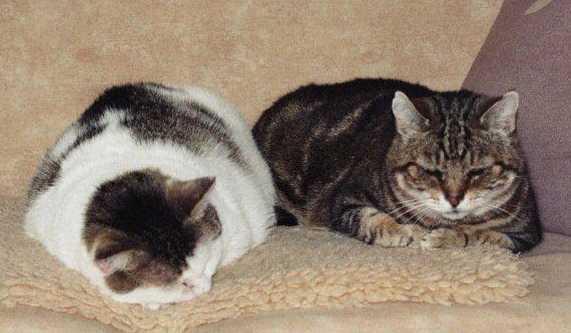 lopen katten weg als ze doodgaan